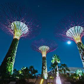 Gardens By The Bay by Samson Calma - Buildings & Architecture Public & Historical ( gardens by the bay, light show, garden, singapore, marina bay )