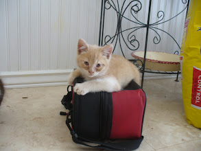 Photo: Poor kitty, he has an awful kitty cold. (Photo copyright Lauryn McCroskey.)