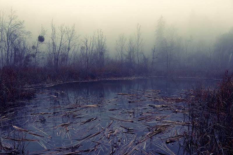 I misteri della palude  di SG67