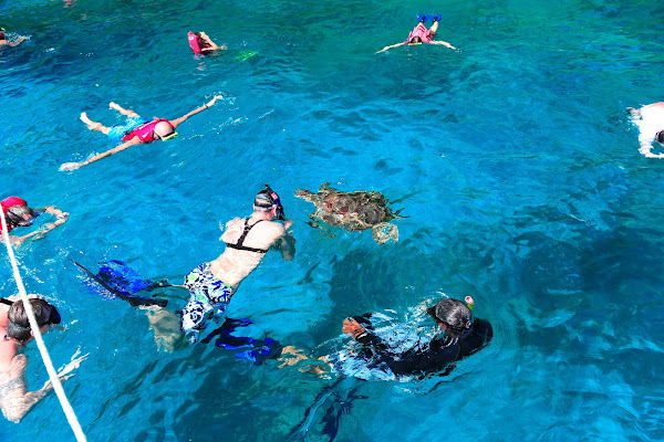 Swim with sea turtles on Similan Island