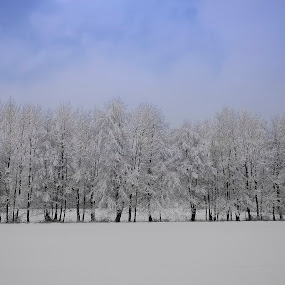 snow forest by Renata Peterman - Landscapes Forests ( winter, nice day, snow, trees, forest )