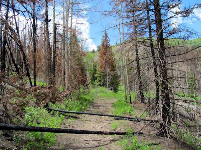 Trees (center) where the geocache is hidden