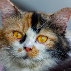 by Charliemagne Unggay - Animals - Cats Portraits (  )