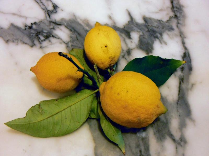 limoni di rita18