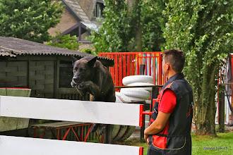 Photo: Hessen Herder's Antrax