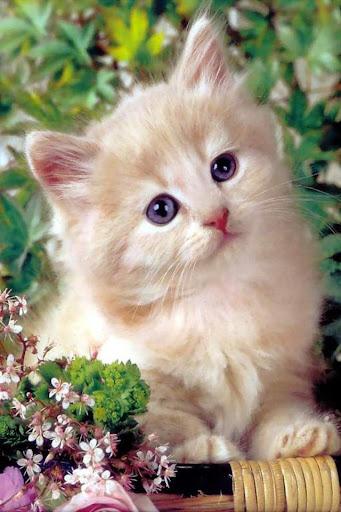 Cute Cat Kitten Wallpapers HD