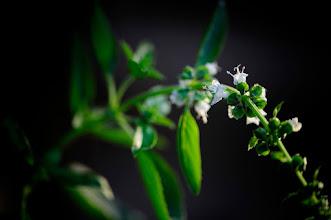 Photo: Goodnight :)  #flowerphotography