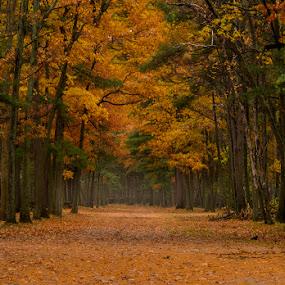 late autumn by Gigi Kent - City,  Street & Park  City Parks