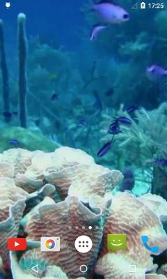 Marine Aquarium Live Wallpaper - screenshot