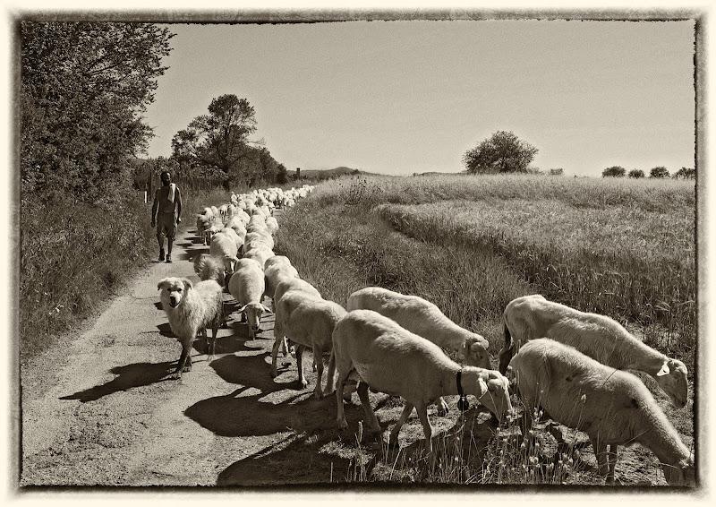 Il pastore  di Patrix
