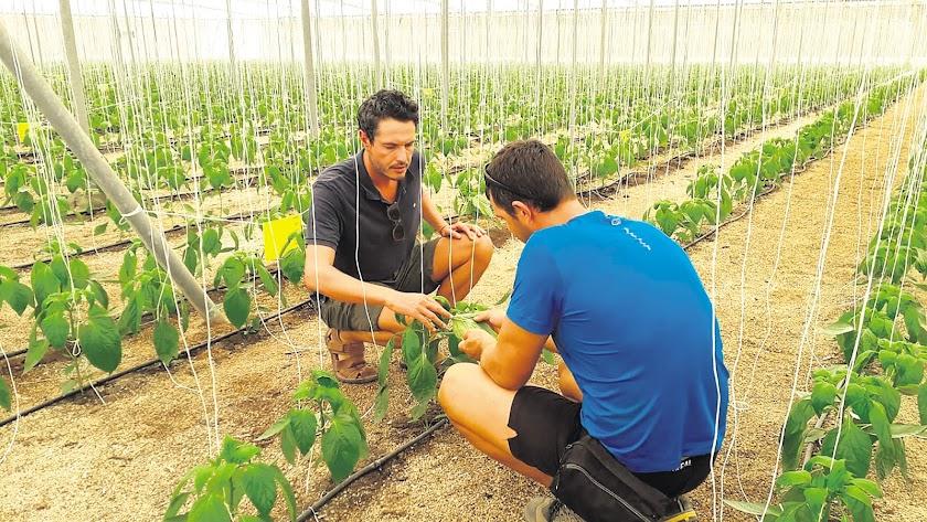 Atención técnica en campo de Agrobío, un elemento esencial en el contacto que la empresa mantiene con los agricultores.