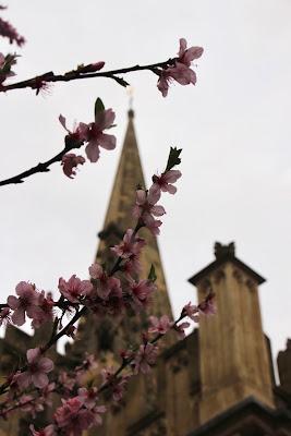 Oxfordian spring di Ilaz