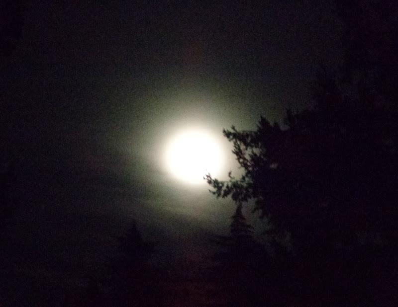La notte dei lupi .... di FLORANS