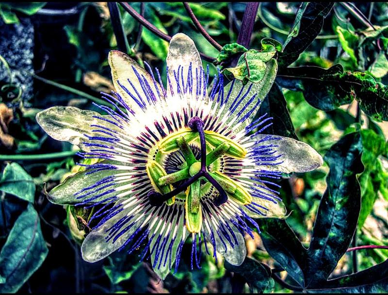 Simmetria floreale di jessica_ammaturo