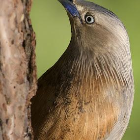 by Gayatri Pimple - Animals Birds
