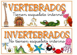 Photo: vertebrados e invertebrados