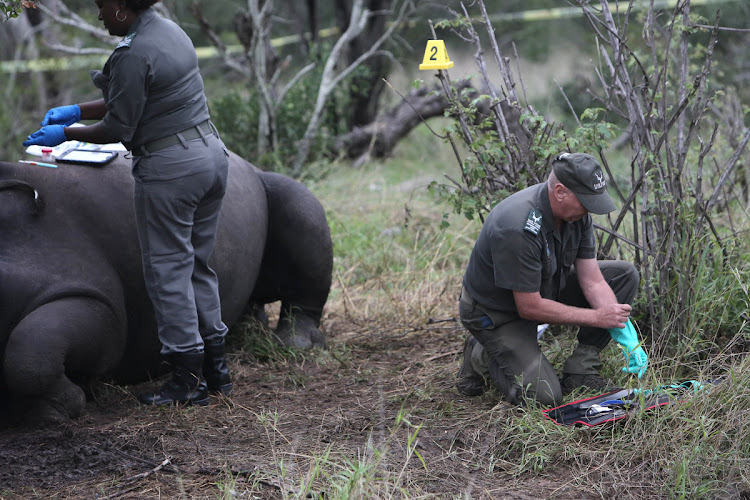 Members of a forensics perform an autopsy in an attempt to collect evidence at the scene of a recently poached Rhino at The Kruger National Park in Mpumalanga.  File Photo