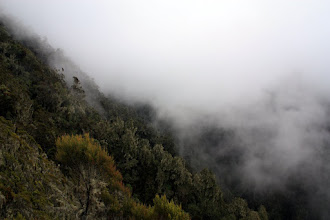 Photo: Now: cloud forest