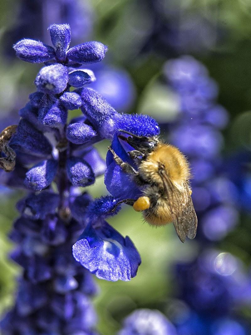 colazione con polline di luly972