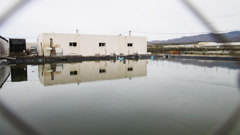 Balsa  de agua para riego agrícola en la Vega de Almería.