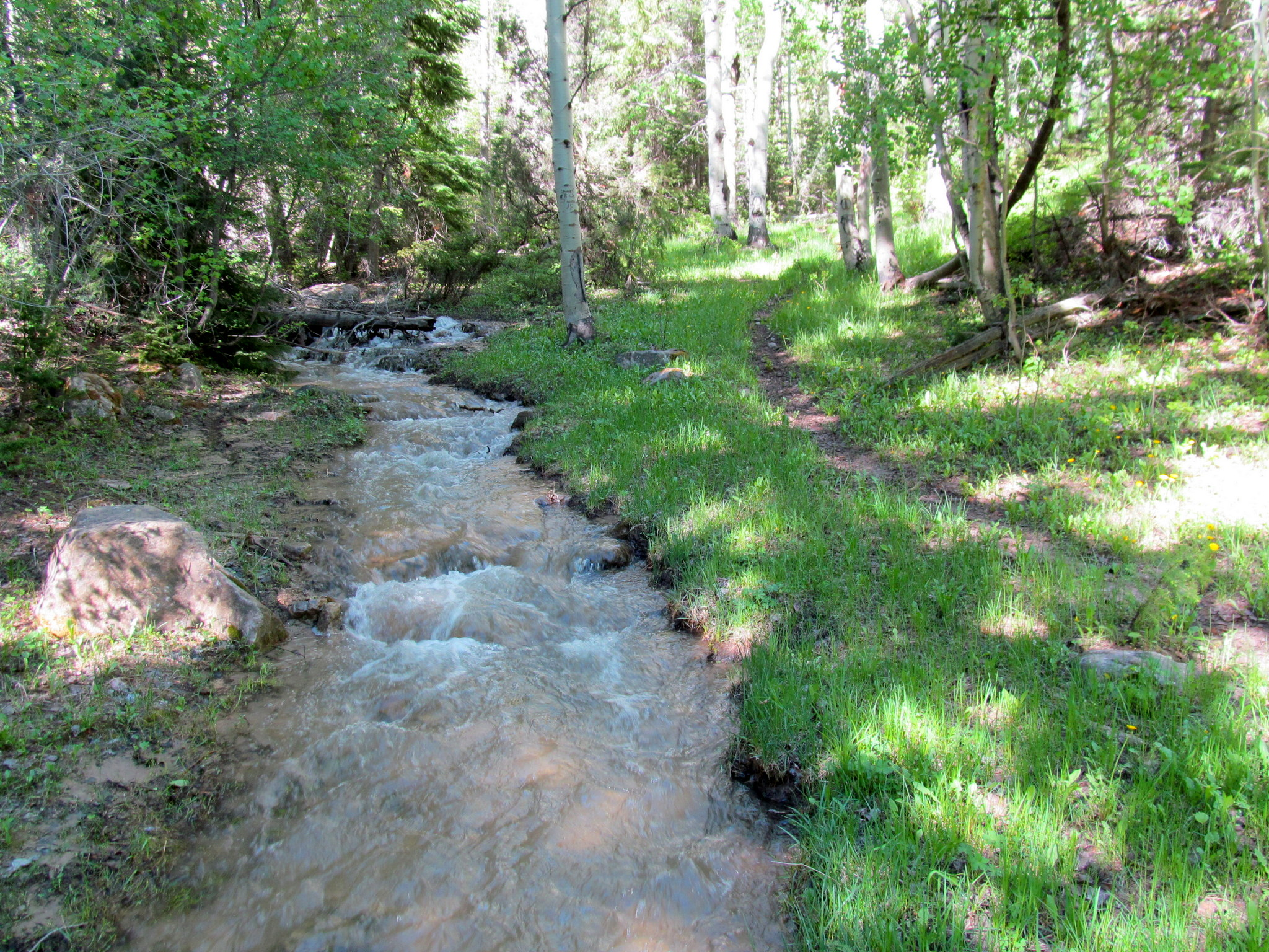 Photo: Stream alongside the trail