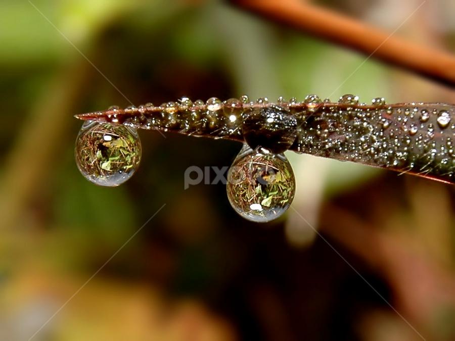 by Eko Adiyanto - Nature Up Close Leaves & Grasses