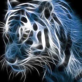 Tiger by Projit Roy Chowdhury - Print & Graphics All Print & Graphics