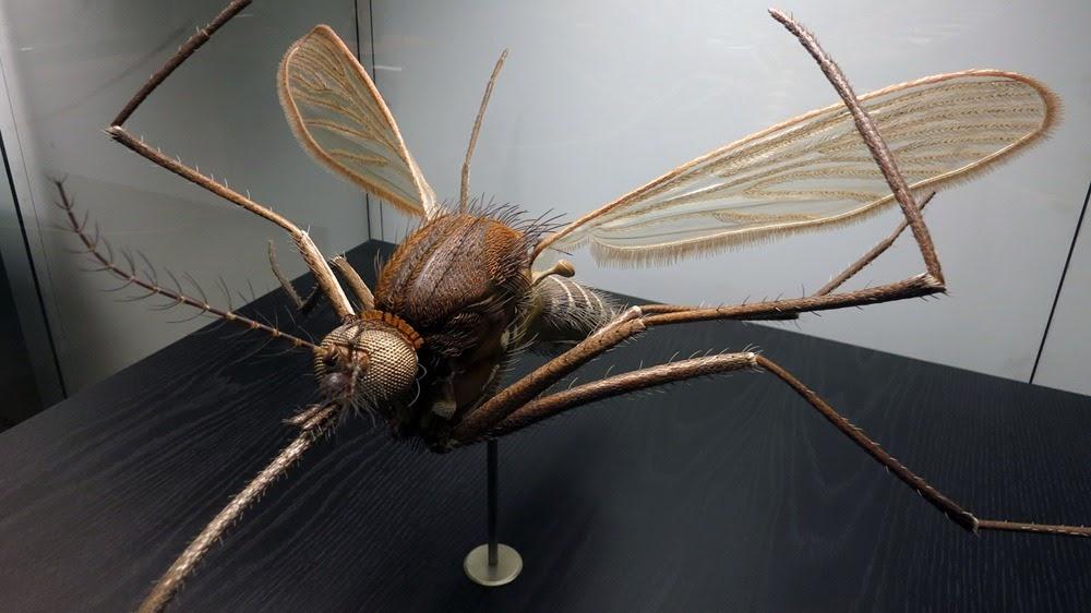 Os incríveis insetos de Alfred Keller