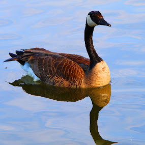 by Mark Wathen - Animals Birds
