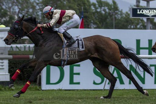 Melodia Salvaje (Dangerous Midge) gana Handicap (1000m-Pasto-CHS). - Staff ElTurf.com