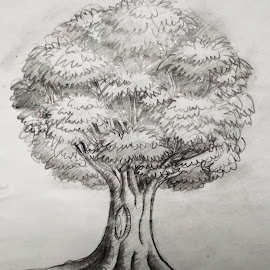 Tree Sketch by Sandip Roy - Drawing All Drawing ( nature, tree, black and white, green, trees, alone, giant )