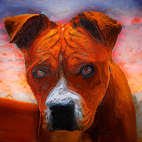 are you looking at me? by John Kolenberg - Mixed Media All Mixed Media ( animals, canelo, dogs, canines, pets, dog, mixed breeds, pwc84 )