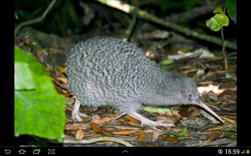 NZ Birding Checklist screenshot 11
