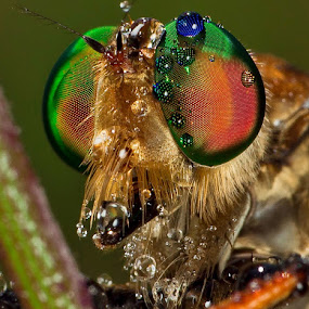 My Portraiture..... by Vincent Sinaga - Animals Insects & Spiders
