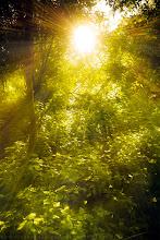 Photo: Divine Light