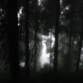 After all its all light and fog by Hrijul Dey - Landscapes Forests ( foggy, shadow, shape, light, woods, silhouette, pine trees, shadows, sharp )