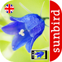 Wild Flower Id - British Isles icon