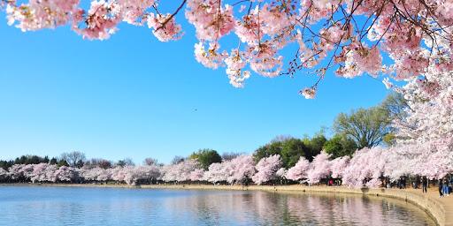 Image result for flowering treesn river