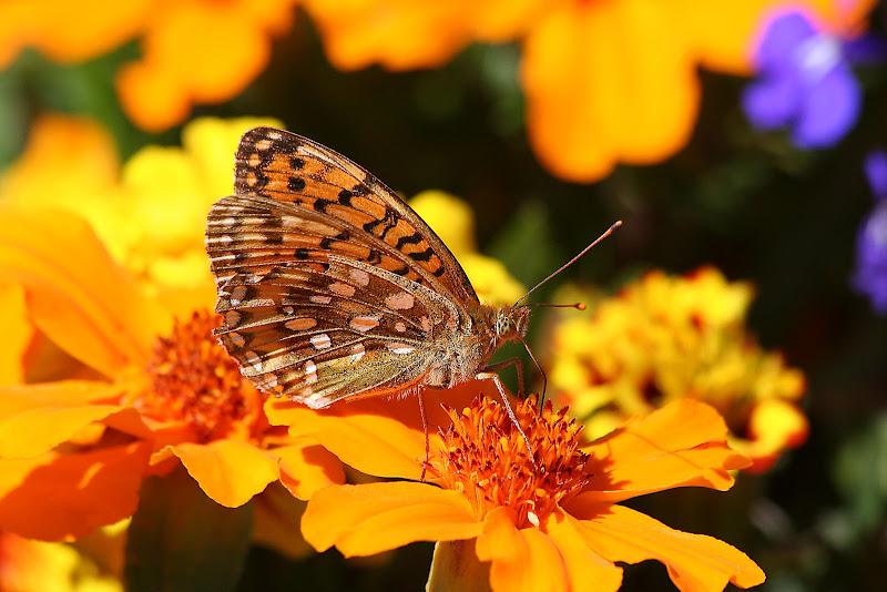 La Farfalla di Fotodiale