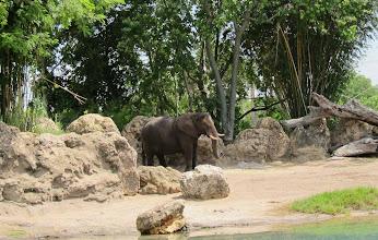 Photo: An elephant at Disney Animal Kingdom