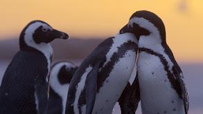 Urban penguins thumbnail