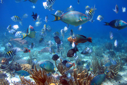 Go snorkeling, explore a tropical reef or enjoy a beach barbecue during a shore excursion to Cozumel.