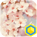 Cherry Blossoms - 카카오홈 테마 icon
