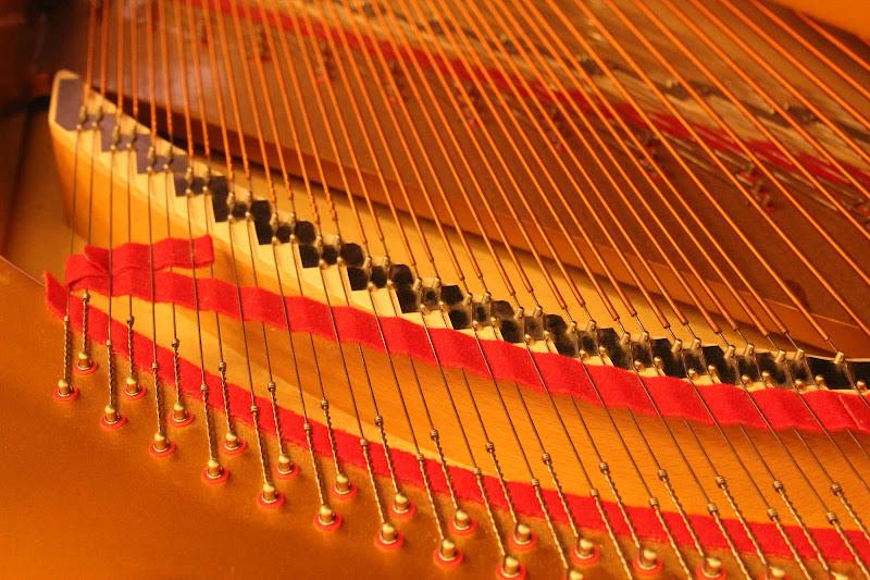 La musica nelle corde di Fepon
