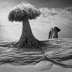 Elephantree by Dariusz Klimczak - Digital Art Places