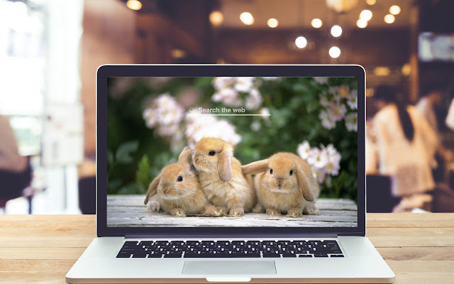 Funny Rabbits HD Wallpapers Theme
