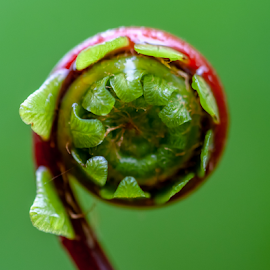 by Keith Sutherland - Nature Up Close Other plants ( raw )