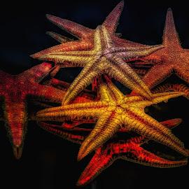 Abstract Star Fish 2 by Dave Walters - Digital Art Abstract ( macro, nature, sea shells, abstract, lumix fz2500, colors, digital art,  )