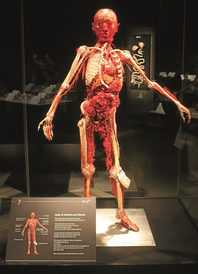 Lifelines. The circulatory system. Picture: EUGENE GODDARD