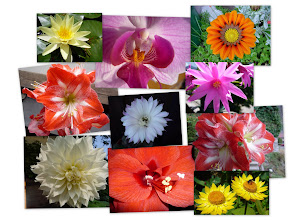 "Photo: Alex' s ""Blüten"""
